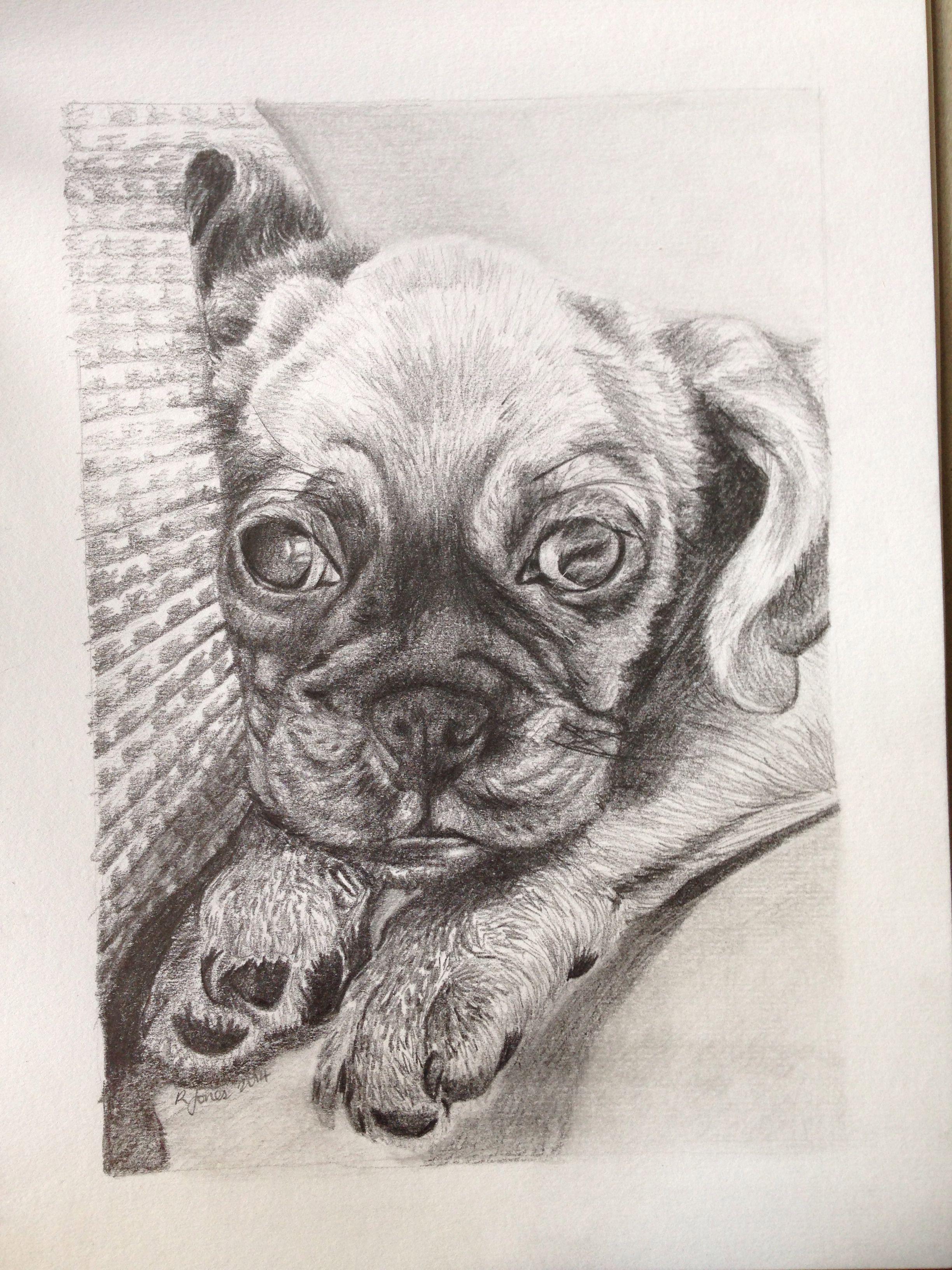 Puppy portrait commission