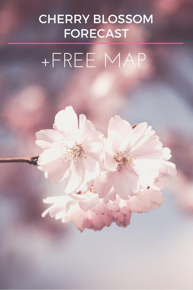 Japan 2020 Cherry Blossom Festival Updated Dates Festivals Around The World Japan Honeymoon Cherry Blossom Festival