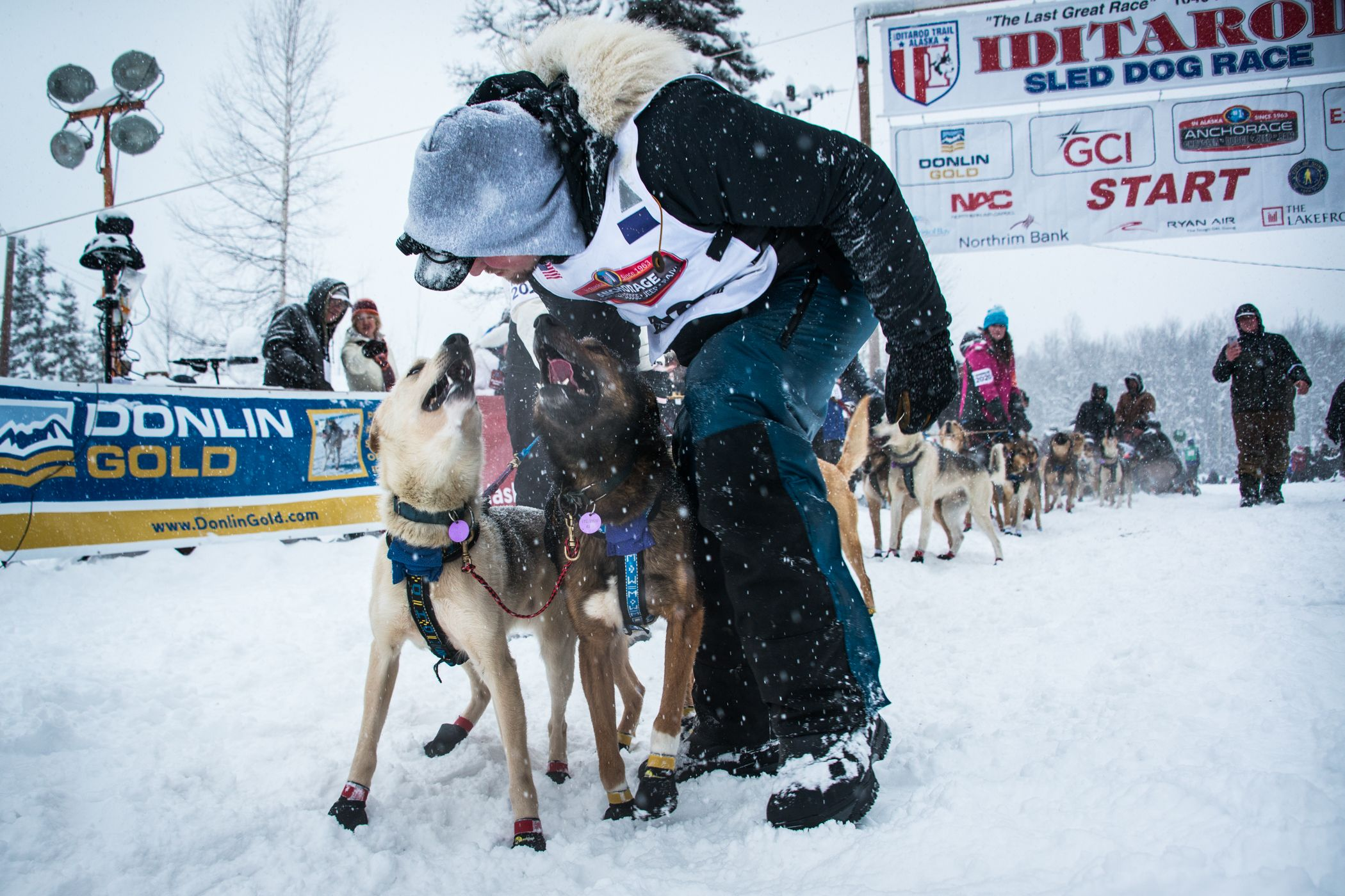Pictures Of Lead Dog In A Sled Team And Driver