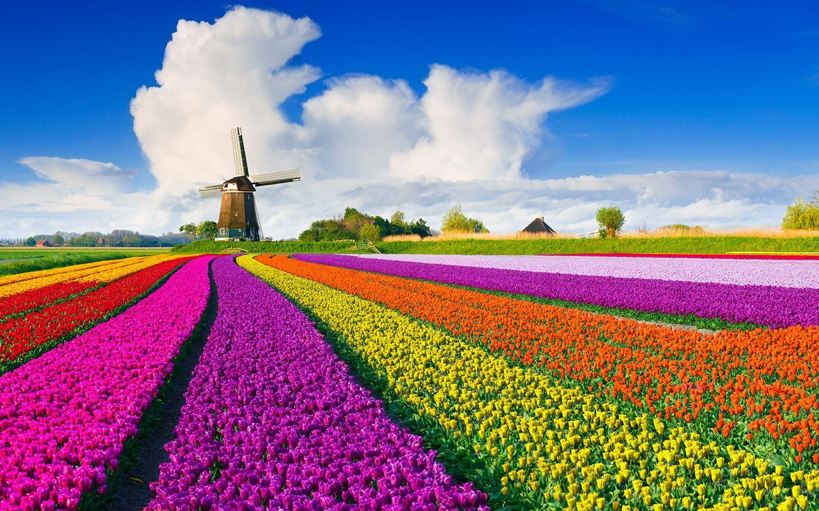 Fly To Europe To Enjoy Spring S Tulips Right Now For Only 354