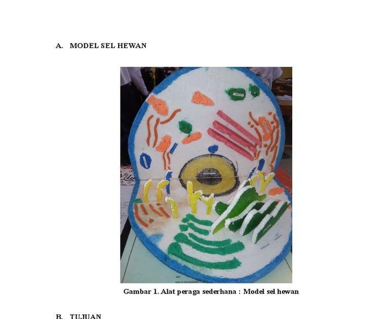 Cara Membuat Gambar Hewan Dari Plastisin Sel Hewan Alat Dan Bahan Membuat Patung Dari Plastisin Berbagai Alat 13 Macam Ke Gambar Hewan Sel Hewan Hewan
