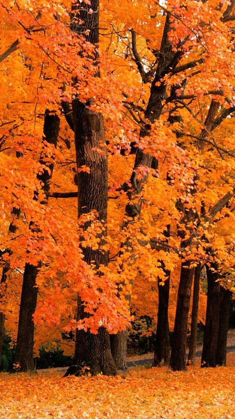 40 Free Amazing Fall Wallpaper Backgrounds For Iphone Fall Wallpaper Cute Fall Wallpaper Fall Backgrounds Iphone