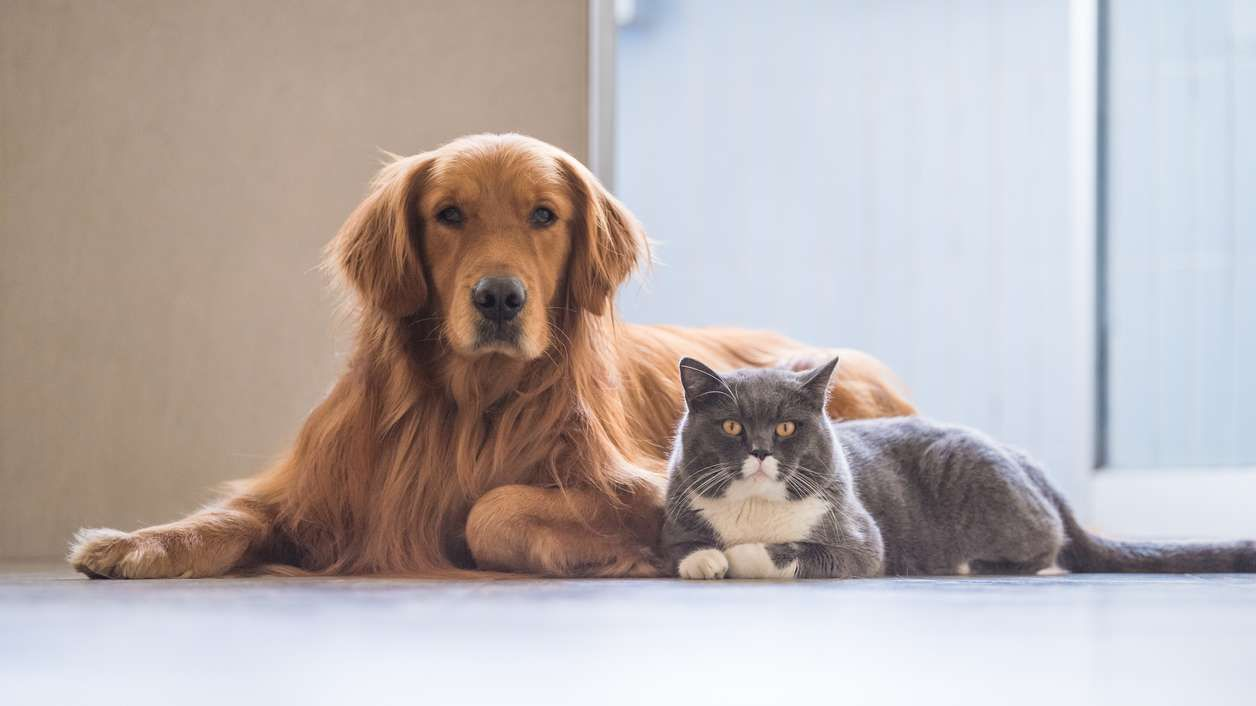 8 Tricks To Help Your Cat And Dog To Get Along Dog Cat Pet Owners Pet Day