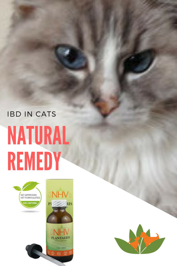 Nhv Remedies Helped Misha With Her Ibd Nhv Natural Pet Products Blog Natural Pet Cat Nutrition Cats