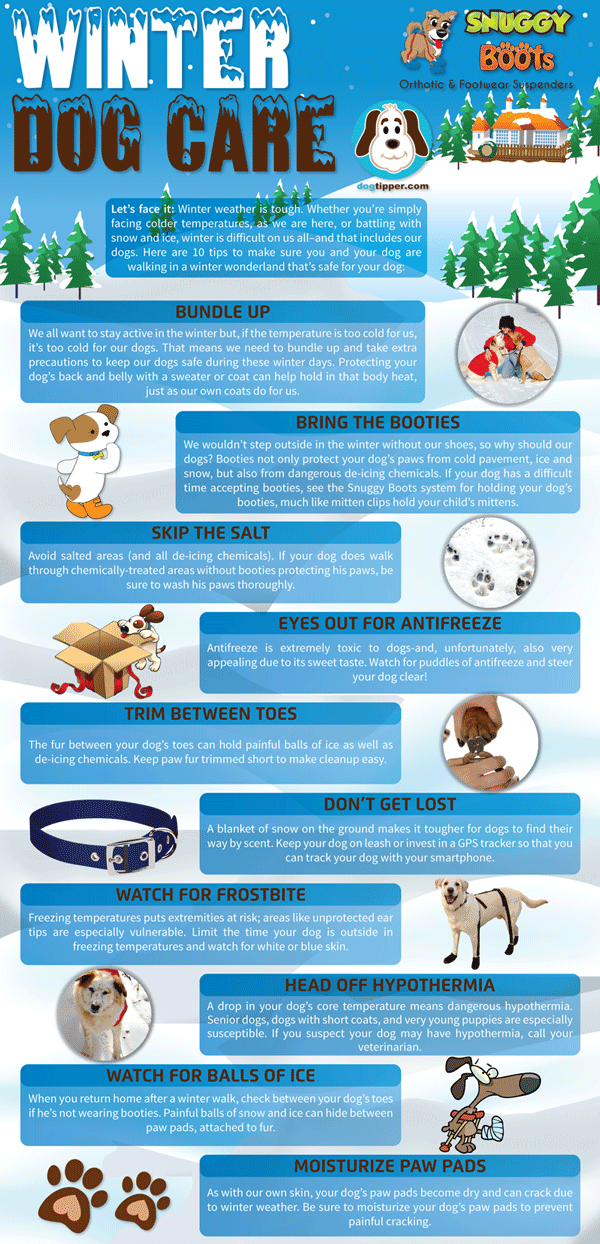 Infographic: Winter Dog Care | Dog Infographics | Dog care