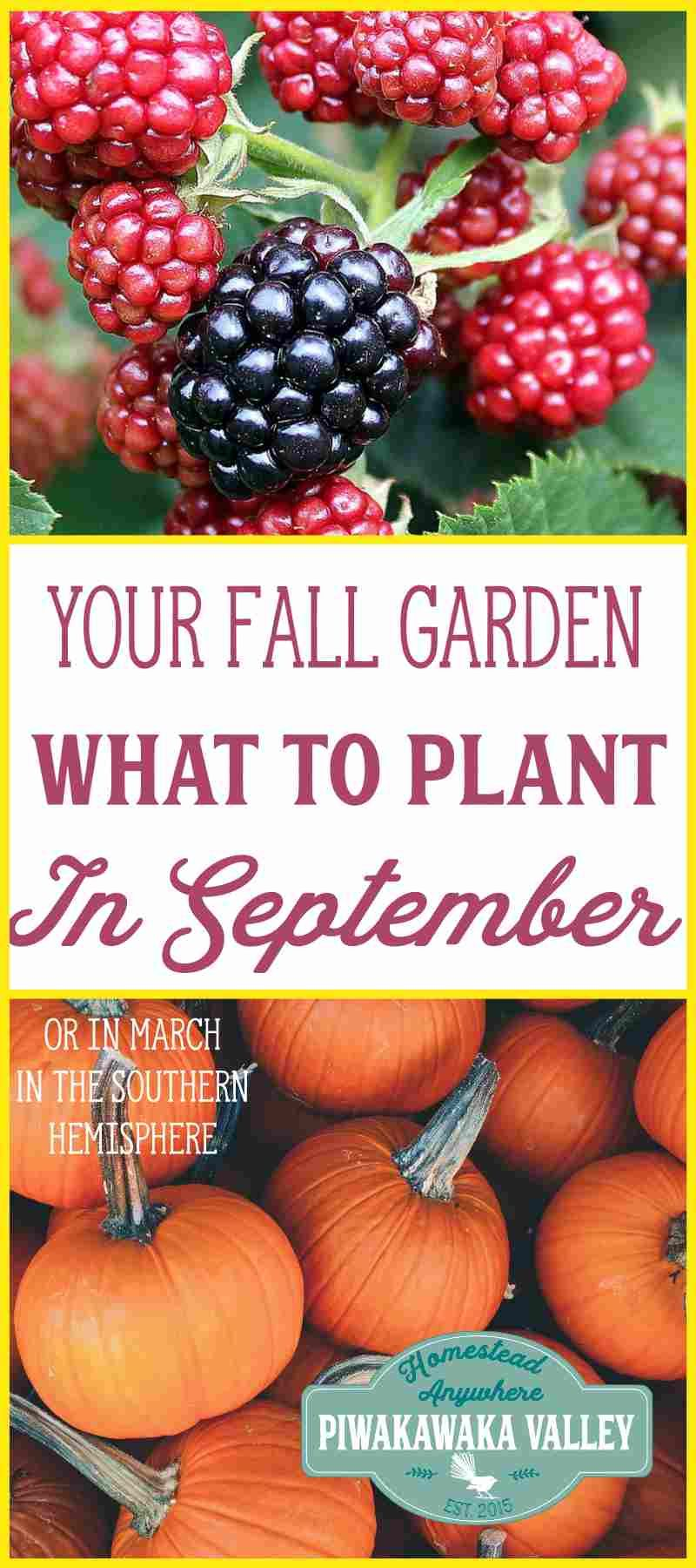 What to plant in your Fall vegetable garden in September (or March)