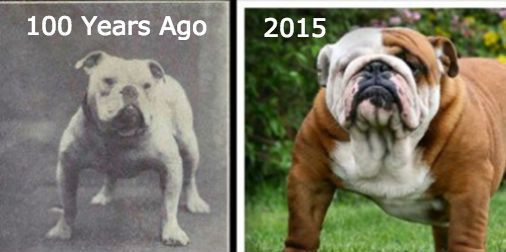 The Shocking Results Of Dog Breeding Before After Popular Dog