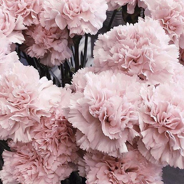 The Prettiest Blooms Pink Flowers Bloom Flowers