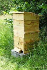 Installer Une Ruche Dans Son Jardin : installer, ruche, jardin, Ruches, Jardin, Colony,, Flowers