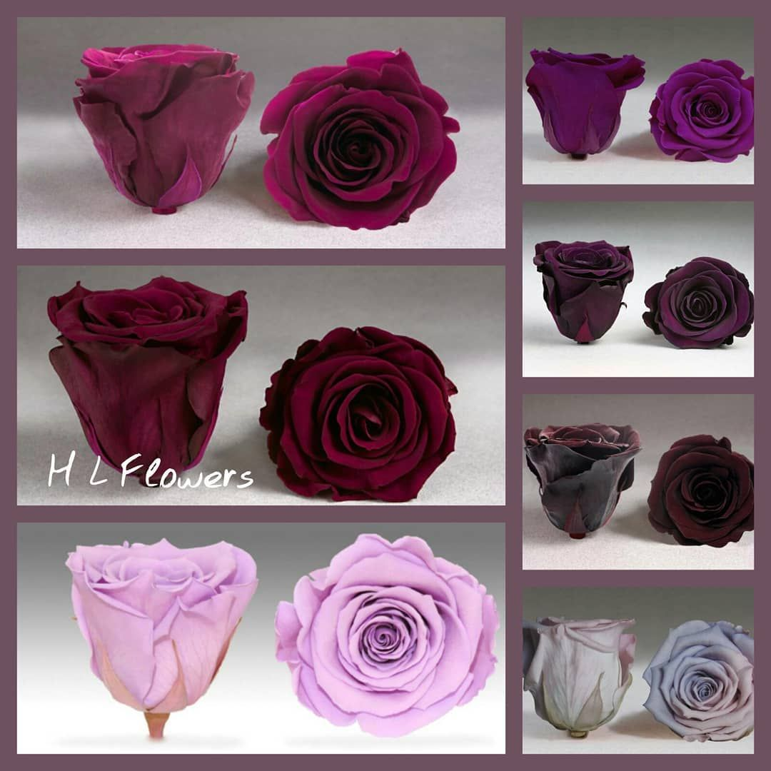 H L Flowers Timelessroses Foreverroses 1 5 2years Lifetime Lilac Darklilac Lightpurple Choose Yourfavourite Weddings Flowers For In 2020 Flowers Rose Lilac