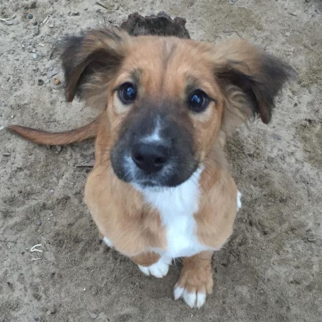 Adopt Kamrie On Dog Mixes German Shepherd Dogs Shepherd Dog