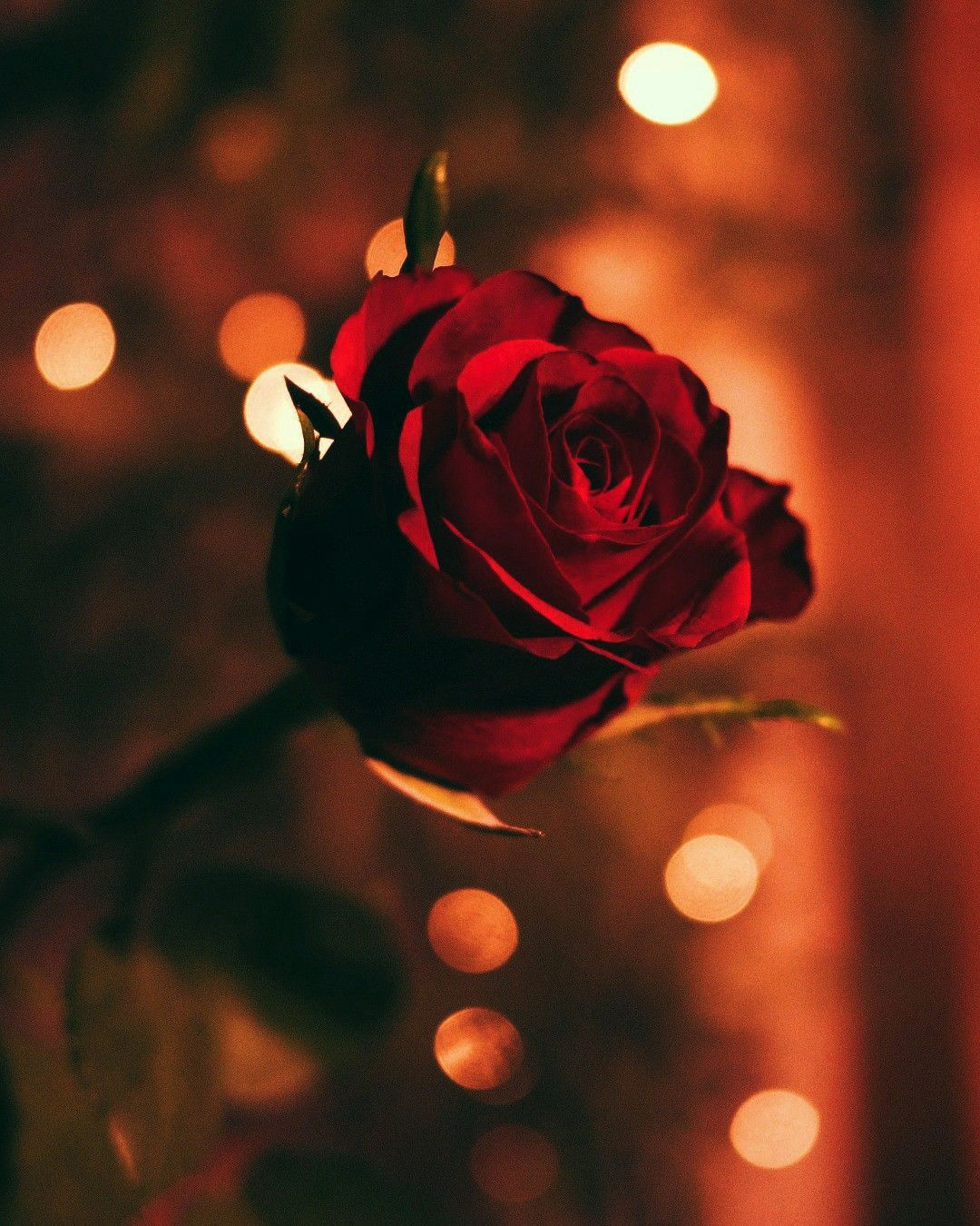 Red Roses On The Red Silk Love Moment Flowers Wallpapers Nature Wallpapers Download Beautiful Hd W Buque De Rosa Vermelha Rosas Sao Vermelhas Rosas Lindas