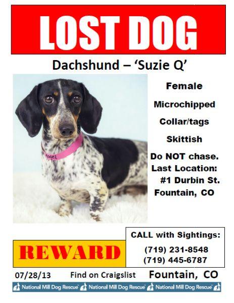 Lost Dog Dachshund Miniature Fountain Co United States