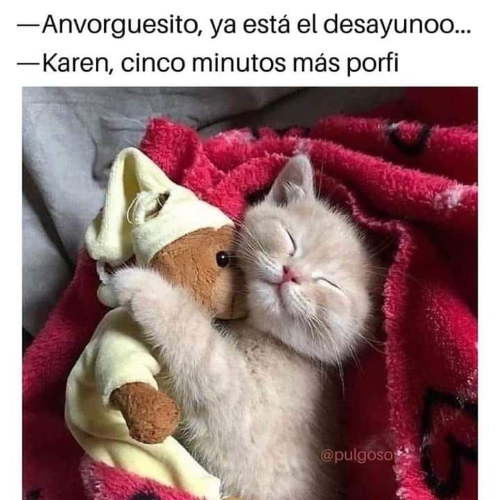 Memes De Karen Y Su Gato Segunda Parte Memes En Espanol La Mejor Recopilacion De Memes Lo Mas Viral De Intern Meme Gato Mascotas Memes Gatitos Divertidos