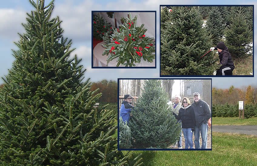 Find a chemical FREE tree, shop the gift shop, have a ...