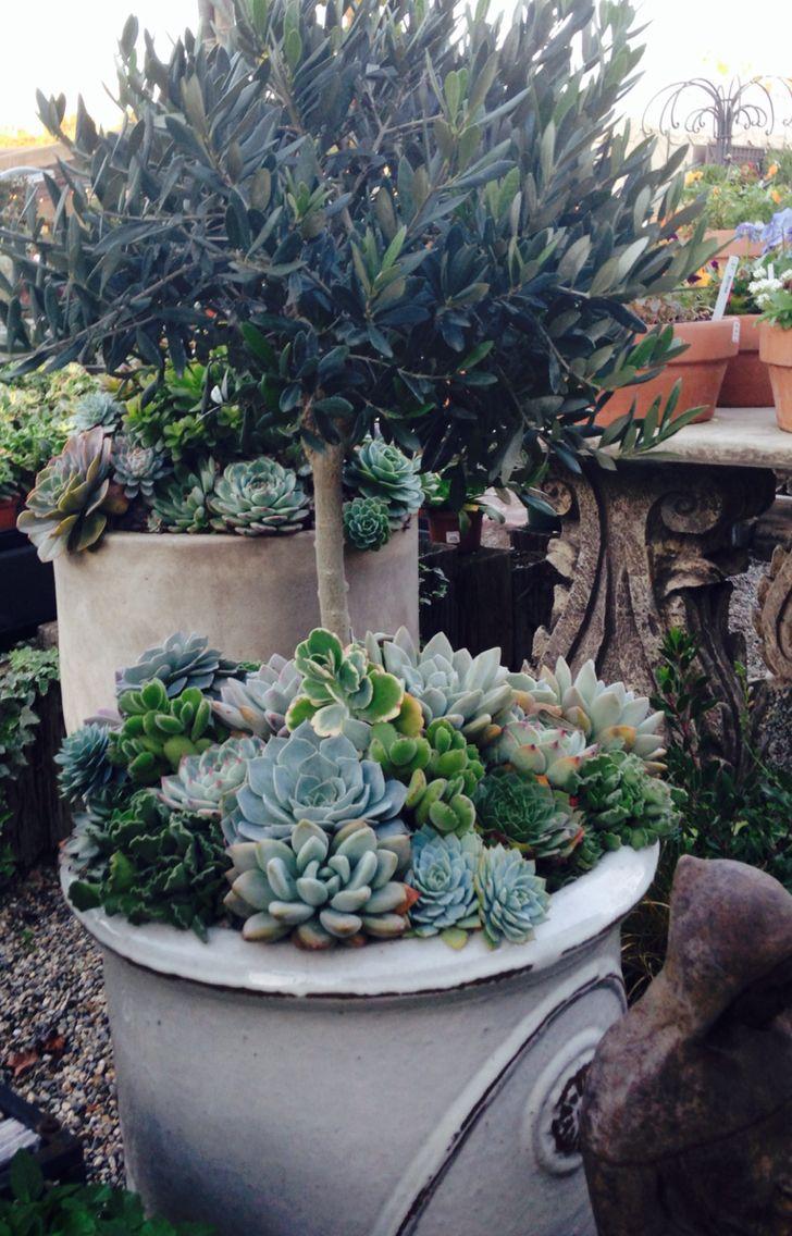 Rogers Nursery Corona Del Mar Ca