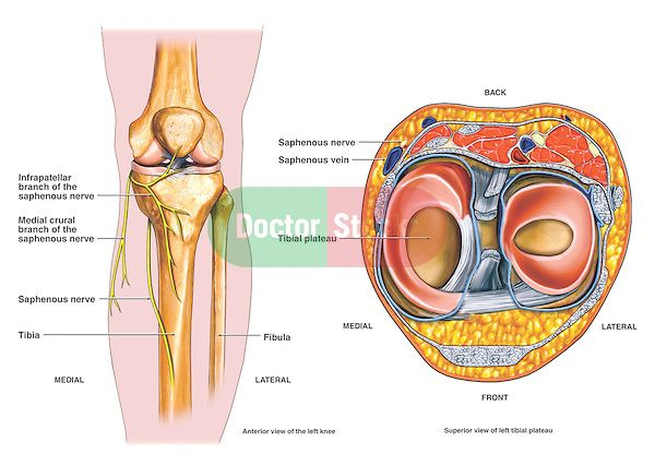 This Medical Exhibit Diagram Is An Anatomical Overview Of The