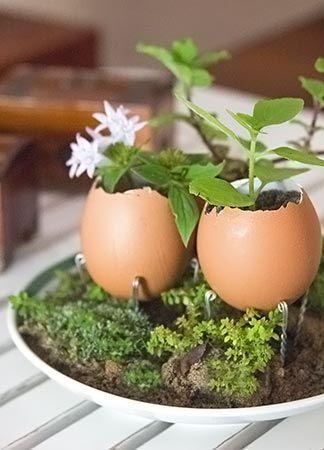 Resultado de imagem para mudinhas em cascas de ovos