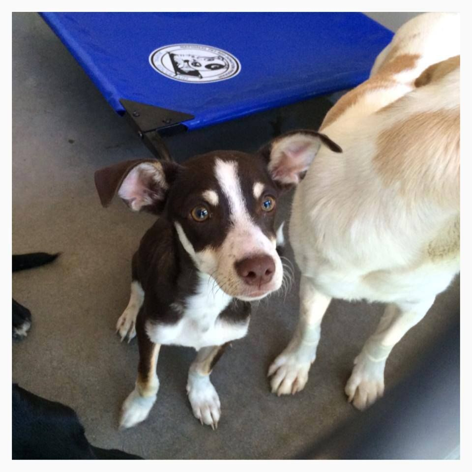 Safe A469655 Release Date 7 30 I Am A Male Chocolate And