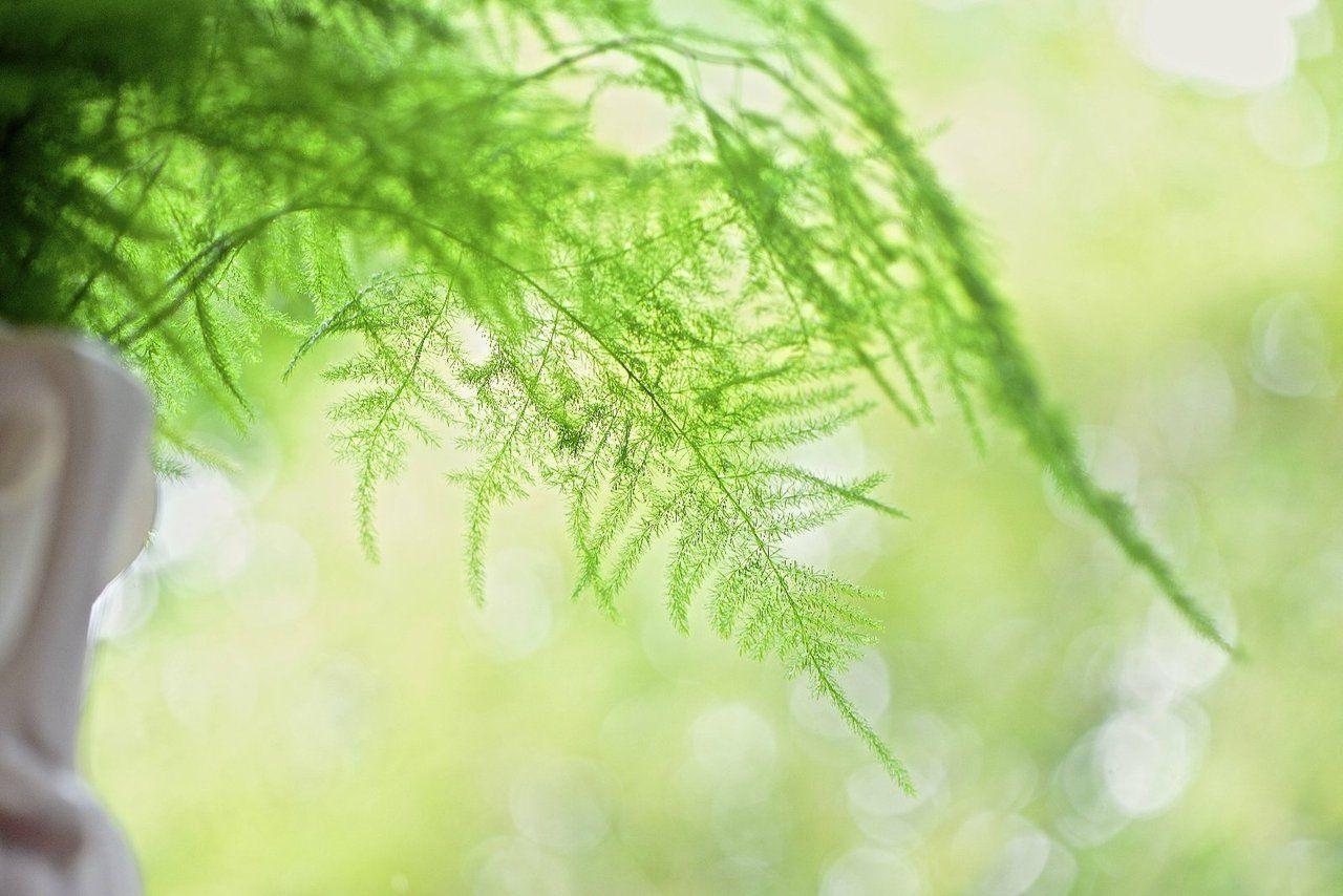 Der farn der ein spargel war blog ute woltron - Zimmerpflanzen sonniger standort ...