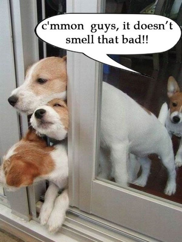 Funny Dogs C Mmon Guys It Doesn T Smell That Bad Dogs Pets