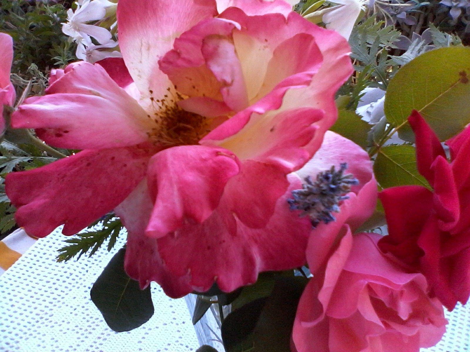Rose appena colte dal mio giardino.