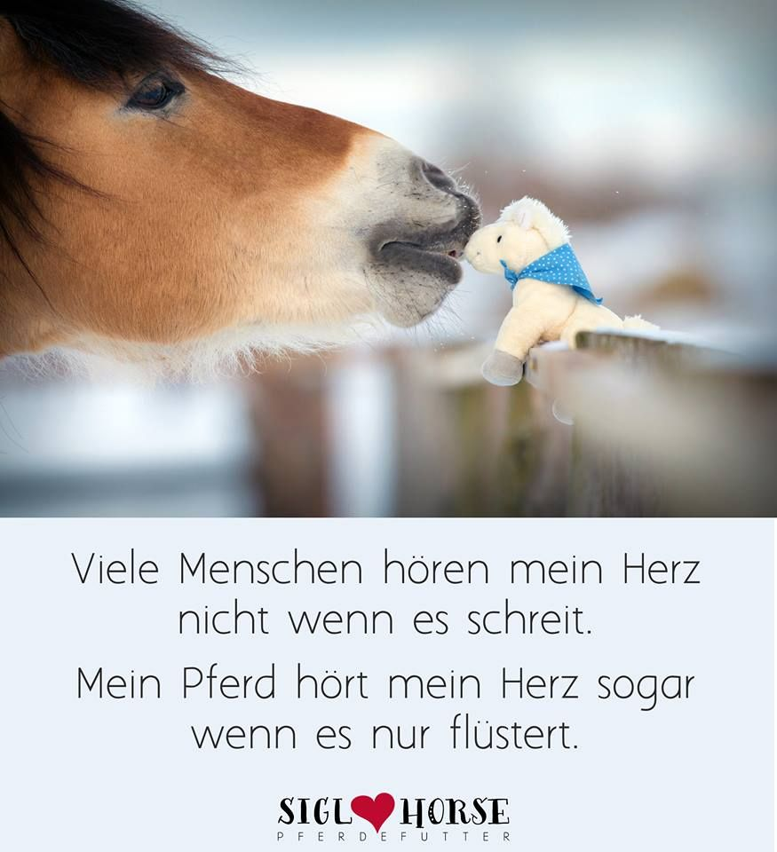 Pin Von The Big Guardian Auf Pferdespruche Horses Horse Quotes