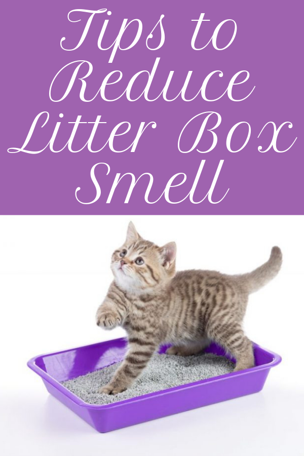 Read More How To Reduce Litter Box Smell Best Cat Litter Cat Litter Box Cat Litter Smell