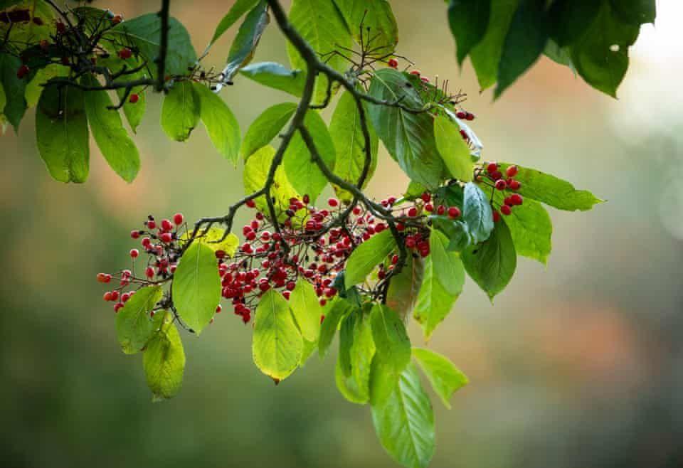 Atmospheric autumnal scenes – in pictures #autumnscenes Atmospheric autumnal scenes – in pictures | Environment | The Guardian #autumnscenes
