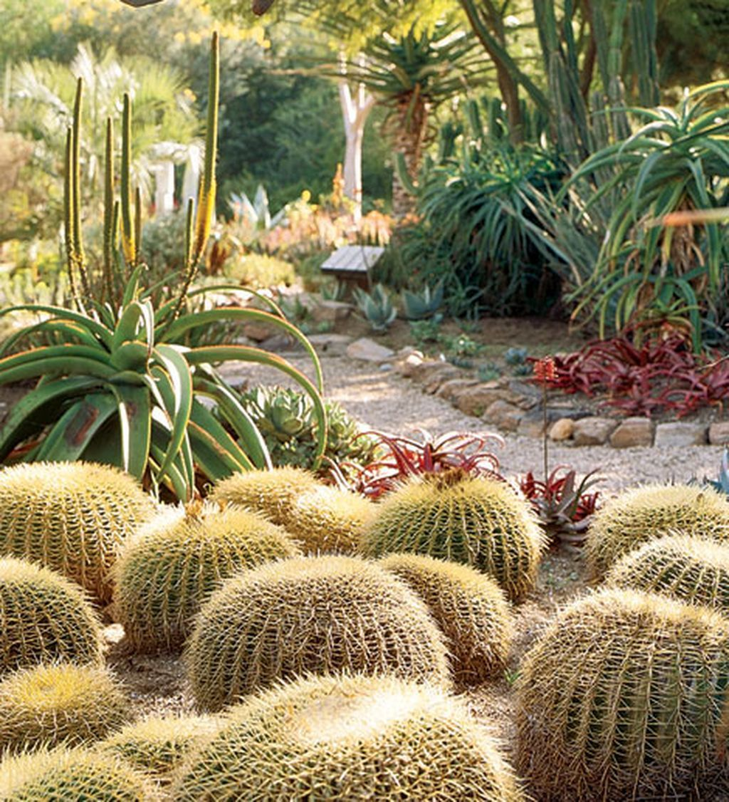 Photo of Beautiful Cactus Garden Ideas For Best Garden Inspirations 46
