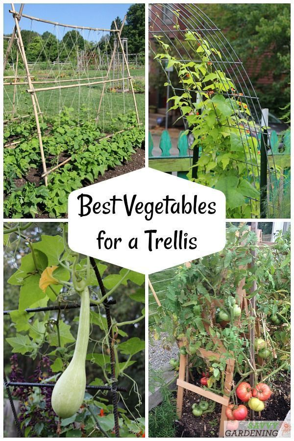 The Best Vegetables for a Trellis for Vertical Gardening
