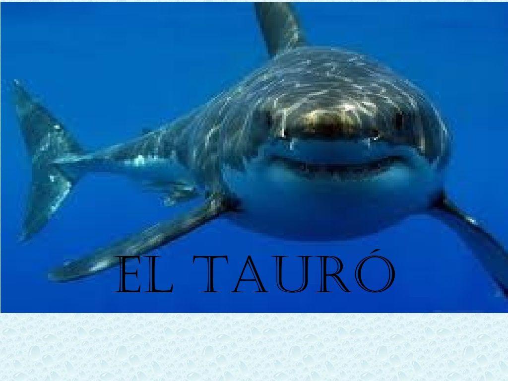 El Tauró By Marinada Masnou Via Slideshare
