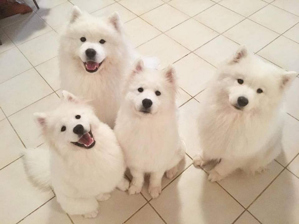 So much floof in one pic d httpifttt2ghy2st cute