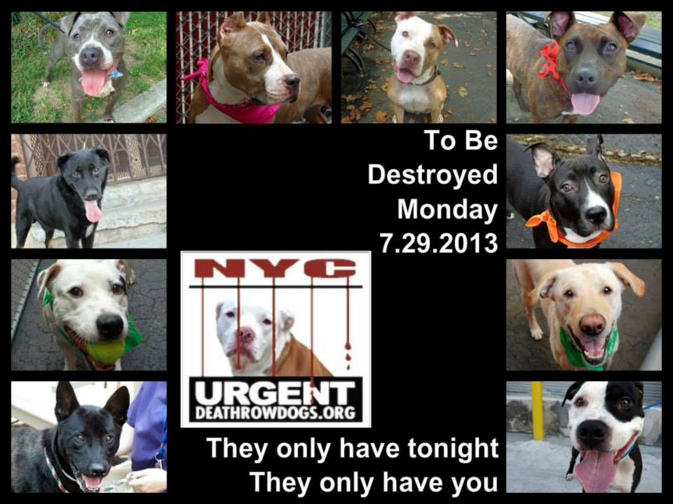 10 Dogs Are Almost Out Of Time The Shelter Opens 8am U Have