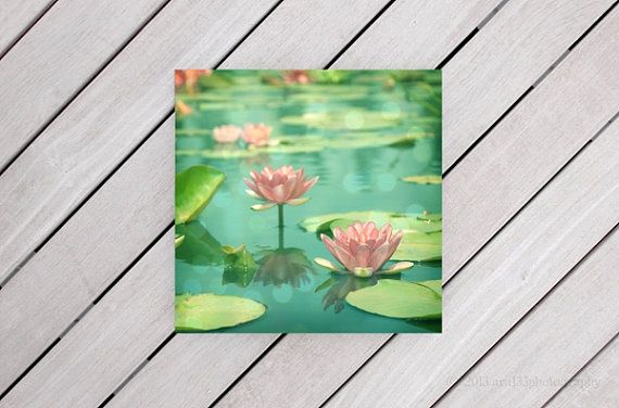Landscape Photograph, Flowers, Nature Photo, Lotus Picture, Pink, Aqua, Green, Blue, Waterlillies, 5x5 inch Print -Dancing in Stillness on Etsy, $15.00