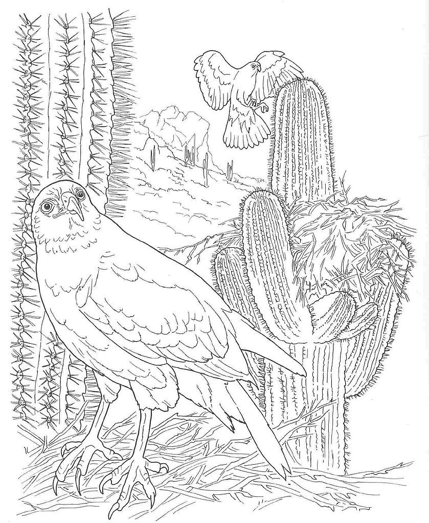 Free How To Draw Desert Coloring Pages Coloring Pages Free Coloring Pages Forest Coloring Pages