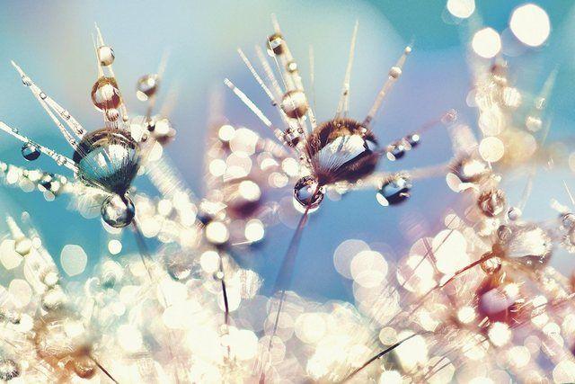 Photo of Artland Premium Wandfolie »Julia Delgado: Pusteblume Regenbogentropfen« online kaufen | OTTO