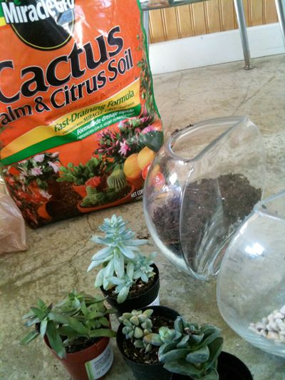 Terrariums Supply Glass Fish Bowl Succulent Soil Cactus Succulent
