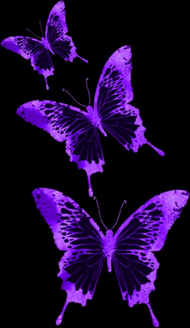 Light Purple Butterfly Wallpaper Aesthetic - Download Free ...
