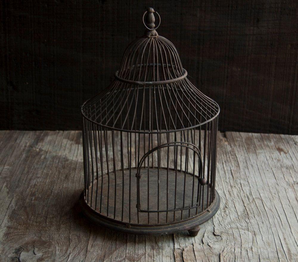 Wireframe birdcage
