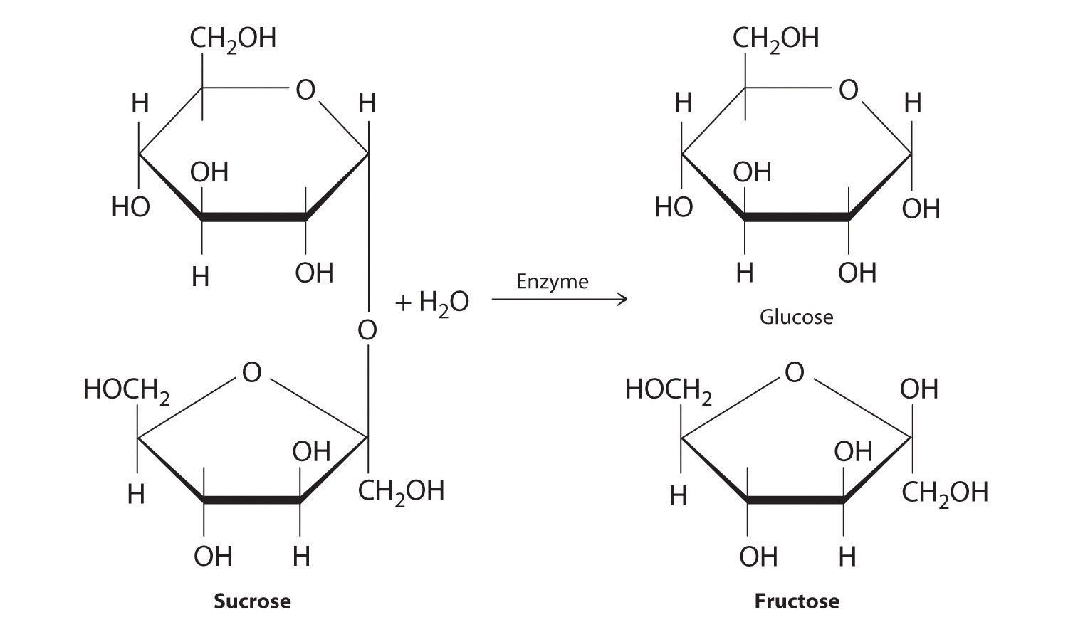 hight resolution of monosaccharaides the monomers of carbohydrates