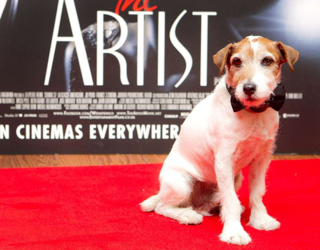 Uggie The Dog From The Artist Put To Sleep At Age 13 The Artist Movie The Dog Star Dogs