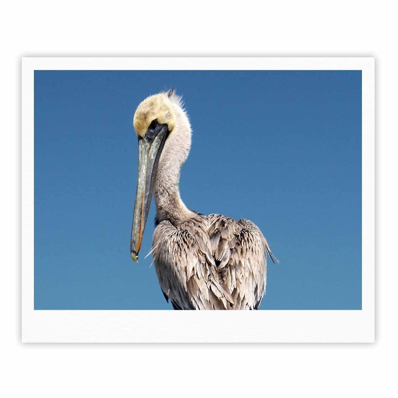 "Philip Brown ""Pelican"" Blue Photography Fine Art Gallery Print"