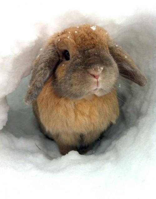 Rabbit playing in the snow Süßeste haustiere