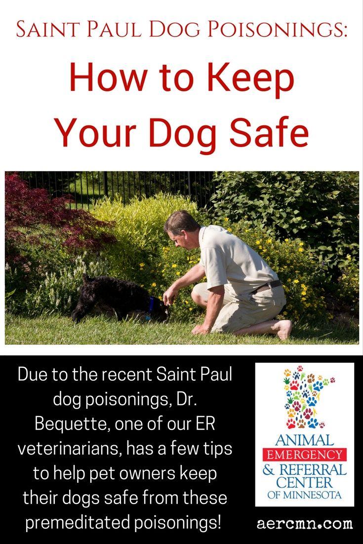Saint Paul Dog Poisonings How to Keep Your Dog Safe Dog