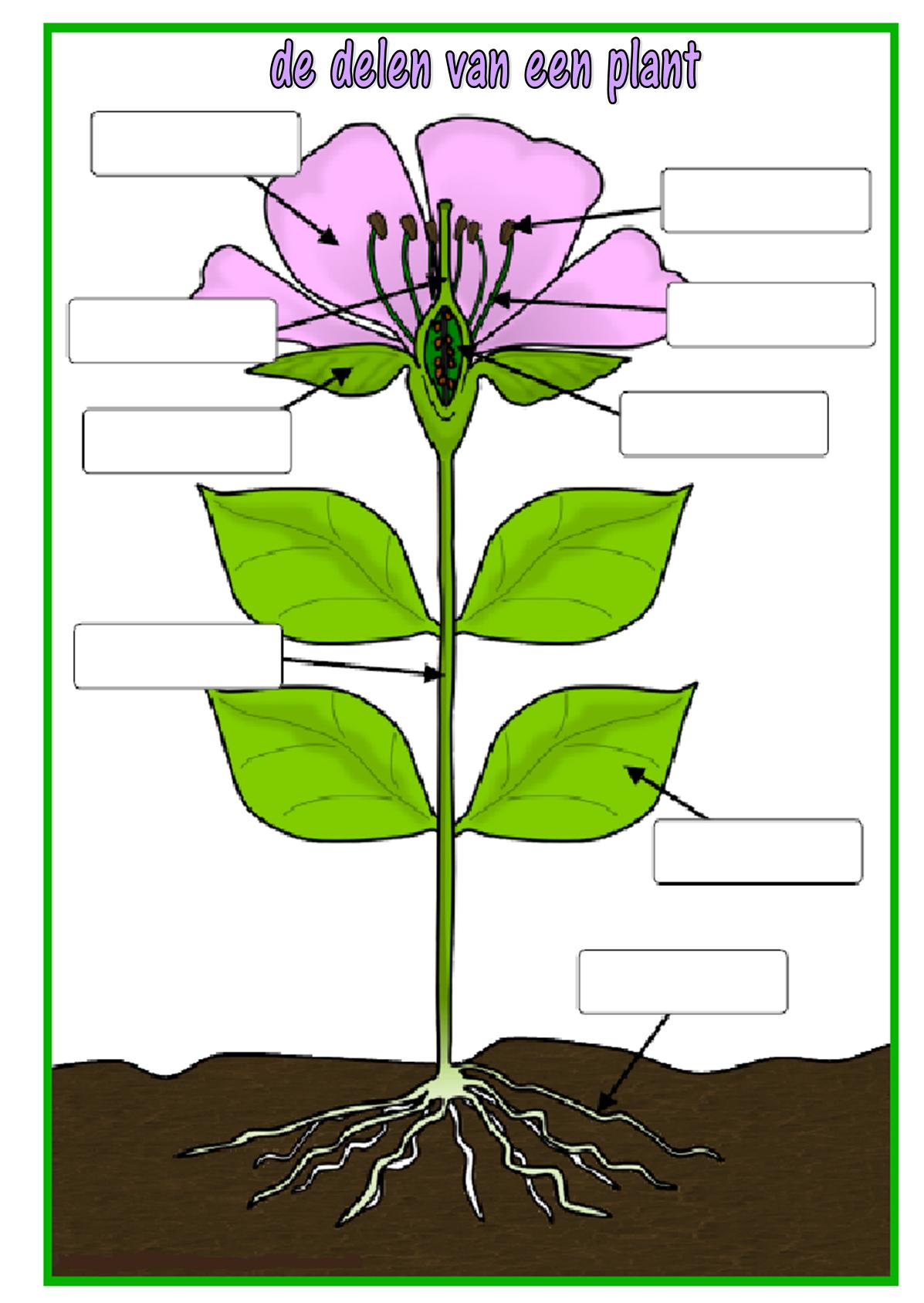 De Delen Van Een Plant Invulblad