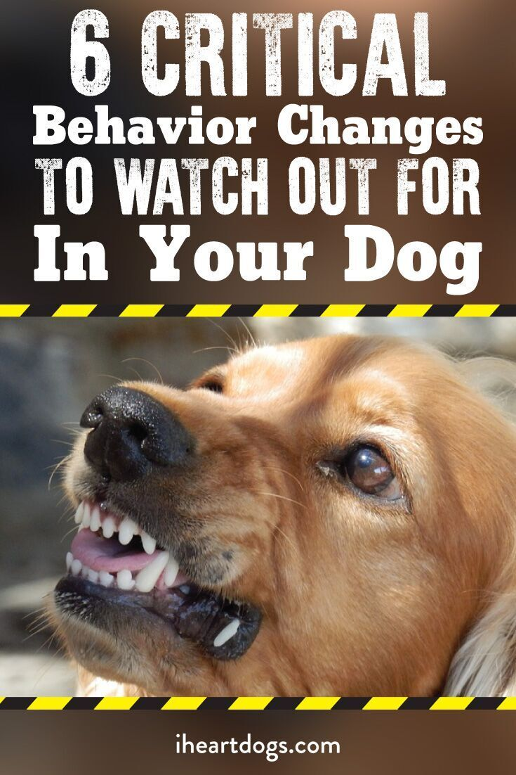 6 Critical Behavior Changes To Watch Out For In Your Dog Dogs