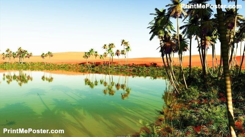 Beautiful Natural Background African Oasis Poster Nature