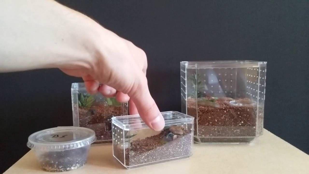 Easy Spiderling And Tarantula Enclosures From Hobby Lobby Display Cases Tarantula Enclosure Pet Tarantula Tarantula
