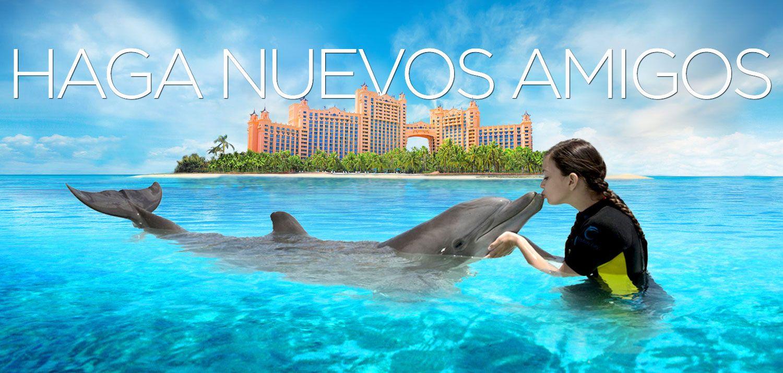 Terapia De Salud Con Delfines Atlantis Resort Spa Islas Bahamas United States Of America Vacaciones En El Caribe Atlantis Resort Lugares De Vacaciones